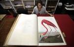 image-5-for-birds-of-america-illustrations-by-john-james-audubon-gallery-105461481