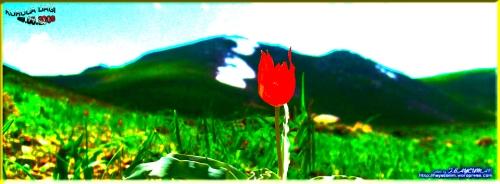 Kuruca Dağı & Lale