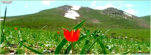 Kuruca Dağı 23.05.2009